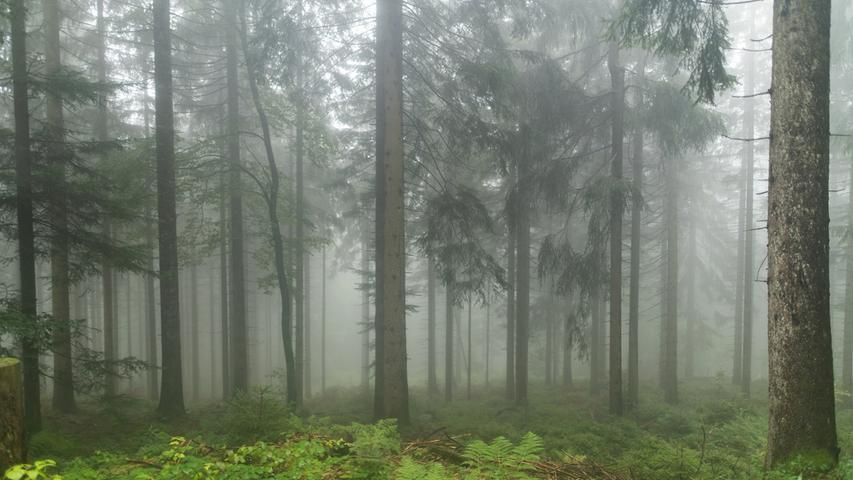 Eine Spaziergängerin brachte den entscheidenden Hinweis zum Auffinden der Frau.Sie hatte sich offenbar für ein Leben im Wald entschieden und sich zwischen den Bäumen eine provisorische Behausung eingerichtet. Die Frau war laut Polizei unverletzt.