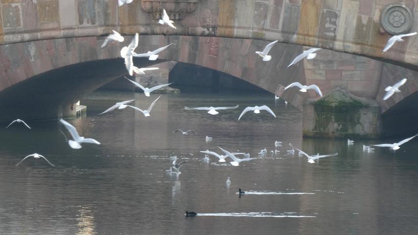 Die Pegnitz lockt Wasservögel jeglicher Art.