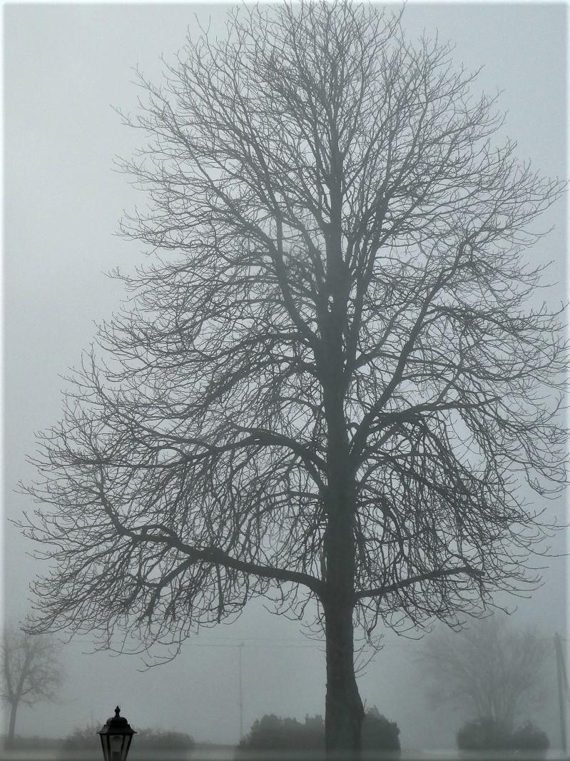 Wie ein Gemälde in Schwarz-weiß: Der prachtvolle Baum (leicht scharf gestellt) taucht aus der Nebelwand auf.