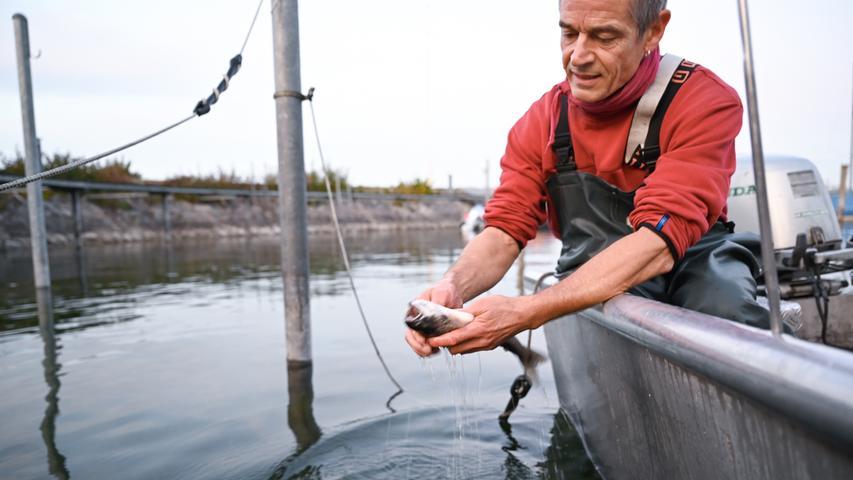 Fisch gilt gemeinhin als sehr gesunde und nährstoffreiche Nahrungsquelle. Die Kalorienzahl der Fische variiert allerdings stark anhand dessen Fettgehalt. Allerdings hat auch der Fisch durch die Klima- und Umweltdebatte an Attraktivität für Endverbraucher eingebüßt. Deshalb gilt: Wenn Fisch, dann in guter Qualität.