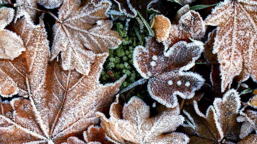 Mit etwas Frost sieht sogar das alte Herbstlaub wieder zauberhaft schön aus.