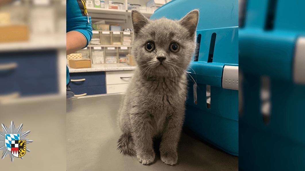 Samtiges Fell und Kulleraugen: Dieses kleine Kätzchen ist unter anderem nach dem illegalen Transport bei einem Tierarzt in Feucht gelandet.