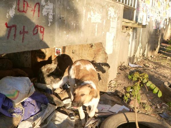 In Äthiopien teilen sich Mensch und Tier oft dieselben elenden Lebensbedingungen, wie hier Hund und Herr unter einer Brücke.