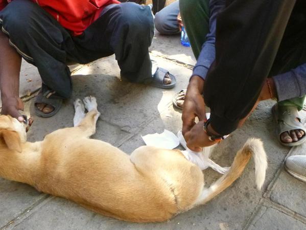 Erste Hilfe für einen Straßenhund: Der Vierbeiner hatte eine tiefe, eiternde Wunde am Hinterlauf. Zum Helfen animiert Barbara Engelhardt stets auch Einheimische.