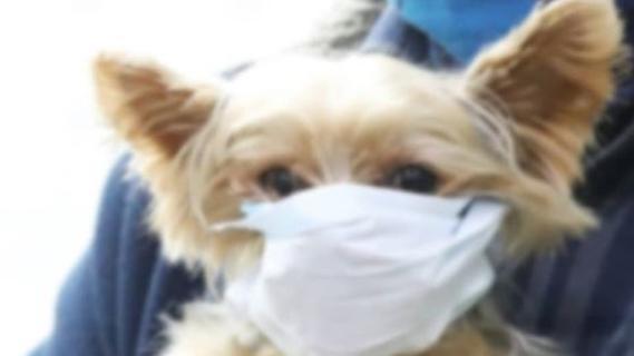 Mogliche Coronavirus Infektion Erstmals Hund In Quarantane Nurnberg Nordbayern De
