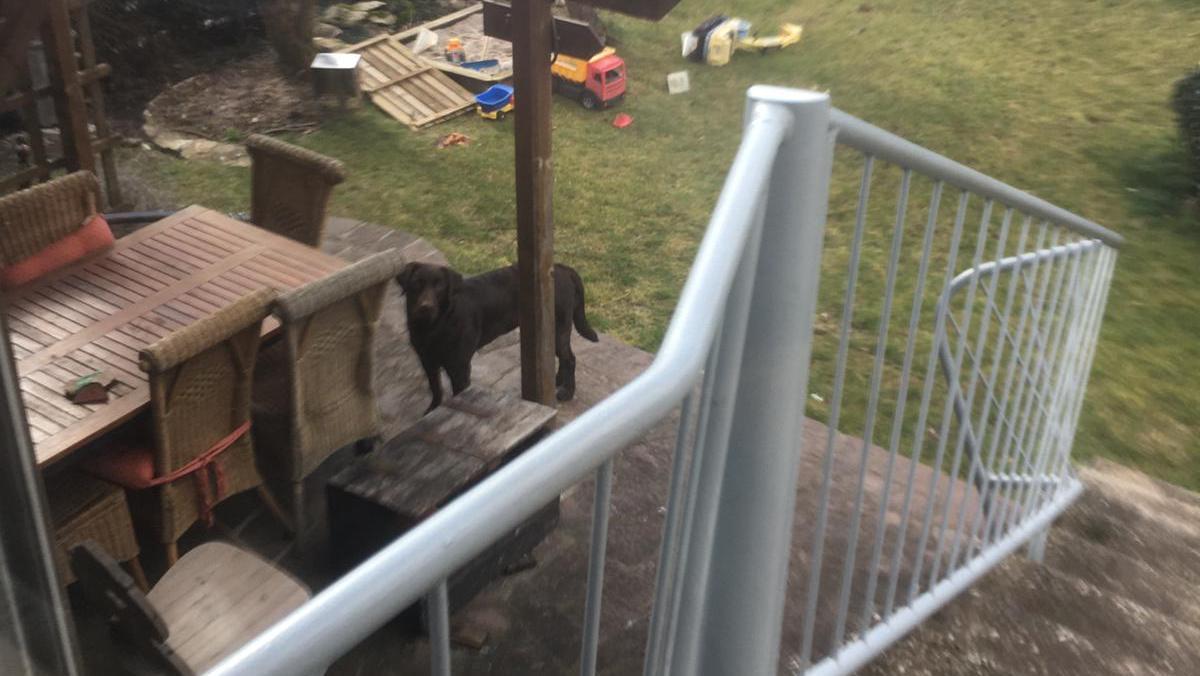 Wem gehört der braune Labrador? Das scheue Tier lässt sich nicht einfangen, die Polizei bittet um Hilfe.