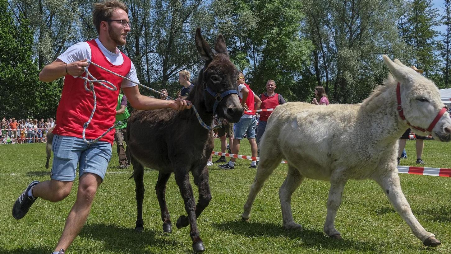 Kein Frühlingsfest: Sonst ein Publikumsmagnet am letzten Tag des Fests, fällt auch das Eselrennen flach.