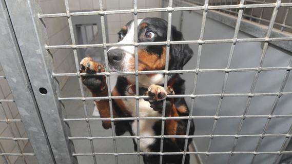 Tiere und ihre Retter in Not: Tierheim Forchheim steht vor großen Aufgaben