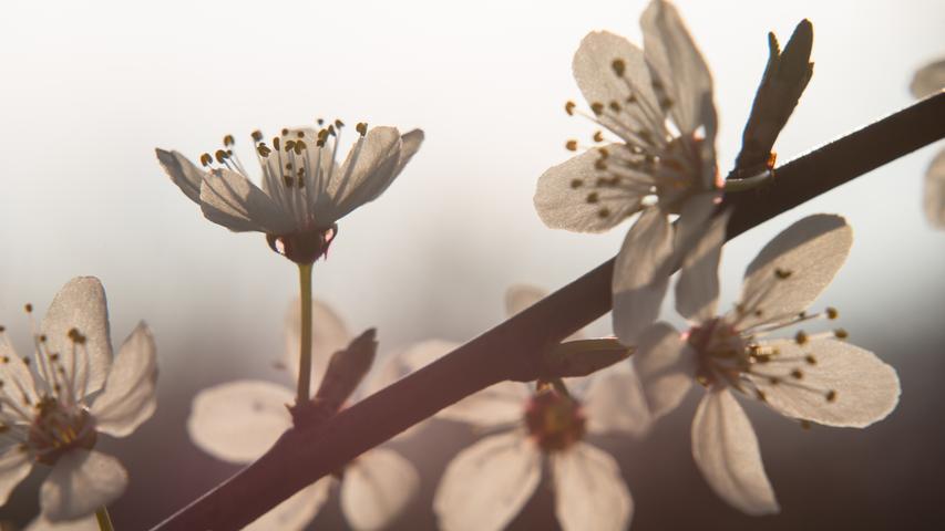 Auch wenn die Entwicklungen der Corona-Krise uns gerade Sorgen bereiten: Die Natur zeigt uns, dass draußen derzeit alles seinen gewohnten jahreszeitlichen Gang geht. Die Flora erwacht und erblüht. Am Tag des diesjährigen Frühlingsanfangs, 20. März, war NN-Leser Winfried Lösel am Nachmittag mit seiner Kamera in den Fluren von Kunreuth unterwegs und hat das zarte Frühlingserwachen wunderbar eingefangen.