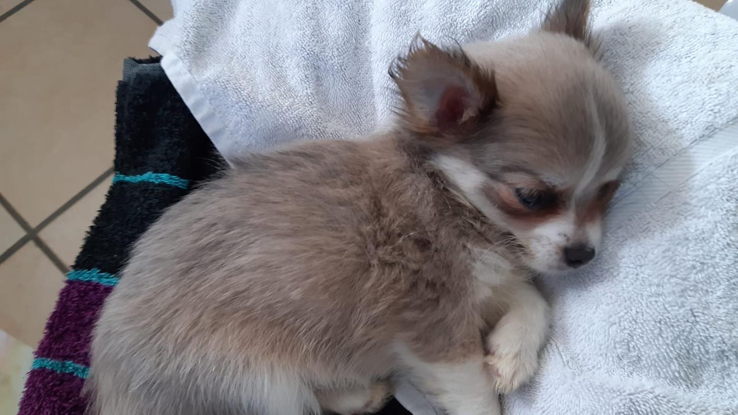 Einer der aus dem illegalen Tiertransport geretteten Hundewelpen.