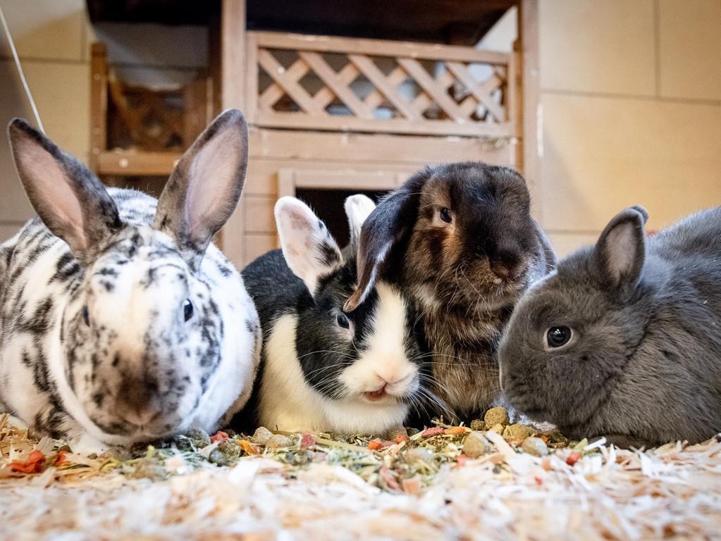 Tiere suchen ein neues Zuhause