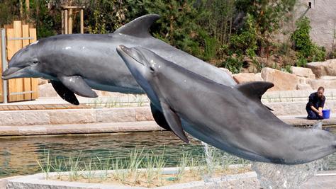 Der Streit zwischen Tierschützern und dem Tiergarten um das Wohl der Delfine geht in die nächste Runde.