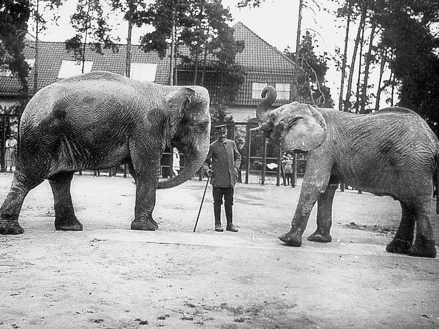 Die Elefantenfreianlage im Alten Tiergarten. Links die Indische Elefantenkuh Memy, die das Herz der Nürnberger im Sturm eroberte.