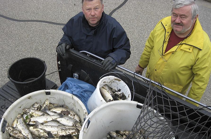 Zentnerweise bargen Mitglieder des Fischereivereins Neumarkt tote Forellen und Kleinfische wie Mühlkoppen und Elritzen aus dem Leitgraben, in den die giftige Brühe von der Pilsach geschwappt war.