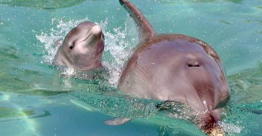 Ein Nürnberger Delfinbaby starb Ende September in Haderwijk in Holland.