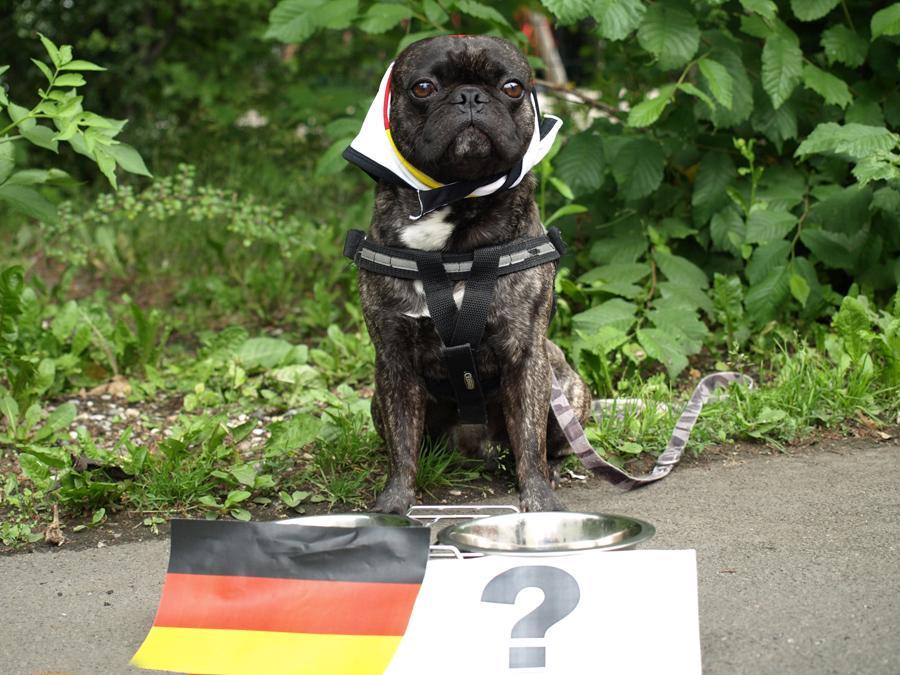 Für das Ottorakel wird es jetzt richtig ernst - im Halbfinale trifft seine Heimat Deutschland auf das Land seines Vaters Italien.