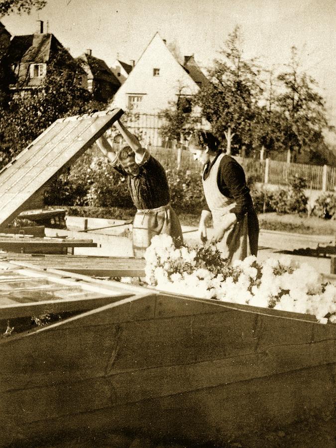 1935: Stefan Wenzels Uroma Anna Schuh (re.) blickt ins Frühbeet.