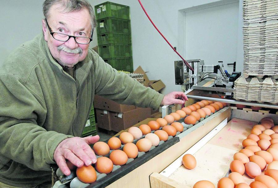 Alles Handarbeit: Peter Richter (li.) sortiert die frischen Eier auf ein kleines Fließband, dort werden sie gewogen, anschließend automatisch mit der genau festgeschriebenen Kontrollnummer bedruckt und dann wandern sie in den Eierkarton.
