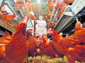 Wenn Maria Richter (re.) im Stall nach dem Rechten schaut, kommen die neugierigen Hennen sofort zu ihr, manche lassen sich dann am gefiederten Hals kraulen.
