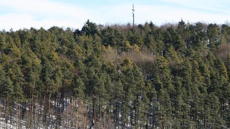 Der bestehende Mast oberhalb von Unterleinleiter soll ersetzt werden.