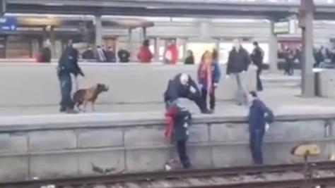 Dramatische Minuten am Nürnberger Hauptbahnhof: Ein Hund schubste eine Frau auf die Gleise. Mehrere Helfer griffen ein.