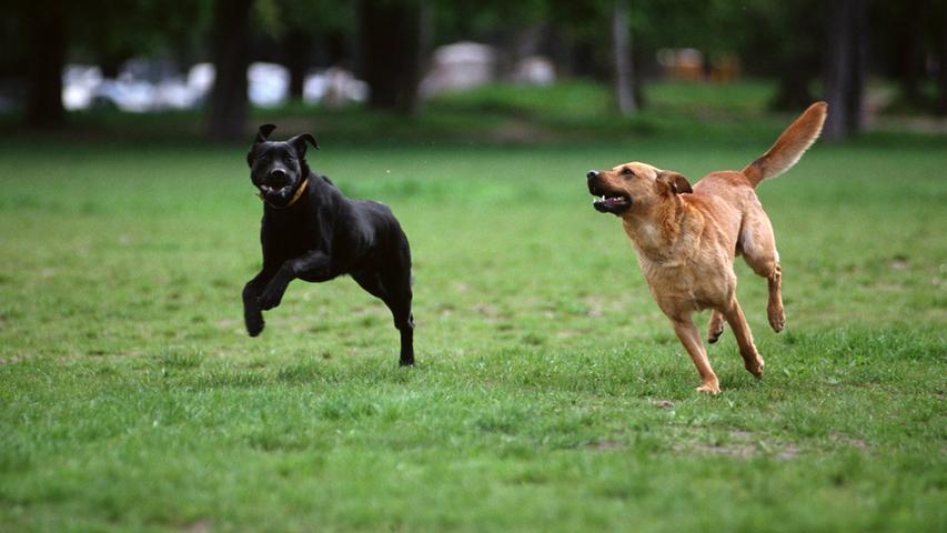 Zwei freilaufende Hunde sorgten bei Kalchreuth für eine handfeste Auseinandersetzung. (Symbolbild)