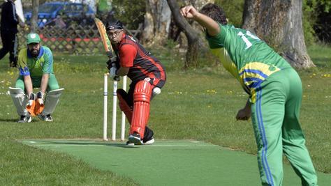 Cricket im Wiesengrund.