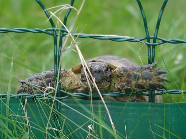 SamSon: Schildkröte von Fam. Lauer
